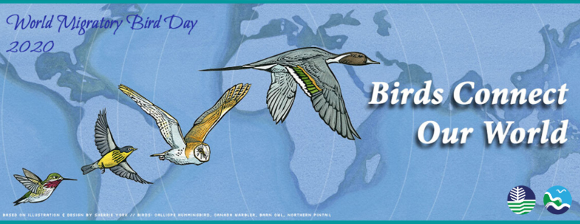 World Migratory Bird Day 2020